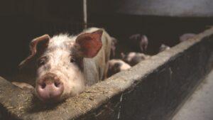 Read more about the article 変革の書籍紹介:「Pig Wrestling ブタとの泥の格闘:問題を解決し変化をもたらす方法」
